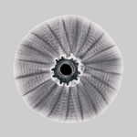 Sea-urchin X-Ray